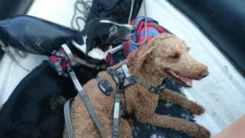 Hundeschwimmwesten im… na ja.. Test…. fast…