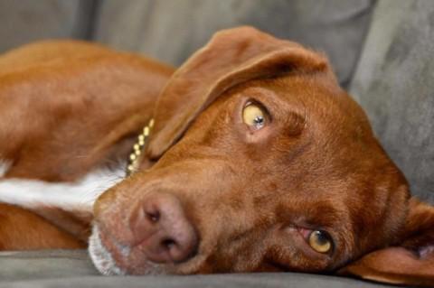 Noch ein Hunde-Blog – Warum?