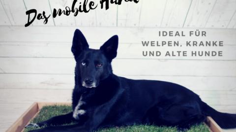 5 Gründe warum wir das Hundeklo Carnilo einfach klasse finden [im Test]