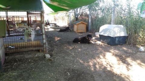 Taro Germany leistet erstaunlichen Tierschutz in der Türkei