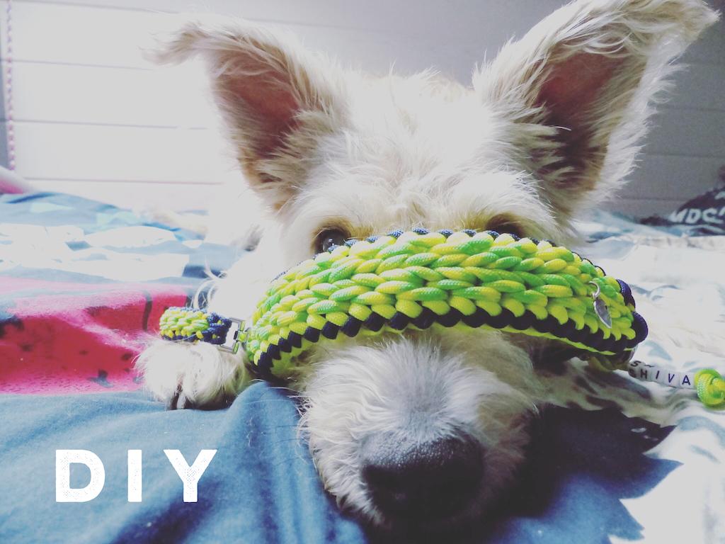 DIY selber machen Hund miDoggy