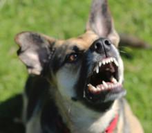 Bellender Hund=Böser Hund?