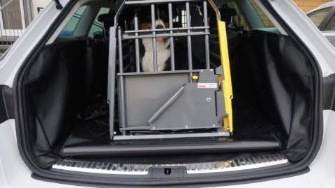 Hundetransport im Auto – sicher und sauber