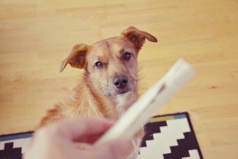 Was kostet ein Hund