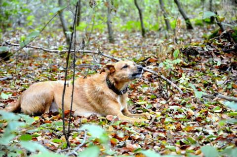 Dogtober – Frau Vela im Herbst