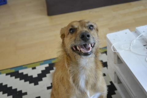 """Hundeerziehung // Das """"Einmal Signal"""" für meinen Hund"""