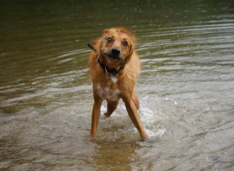 Unnützes Hundewissen