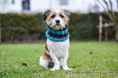 DIY: Loopschal für den Hund – selber stricken