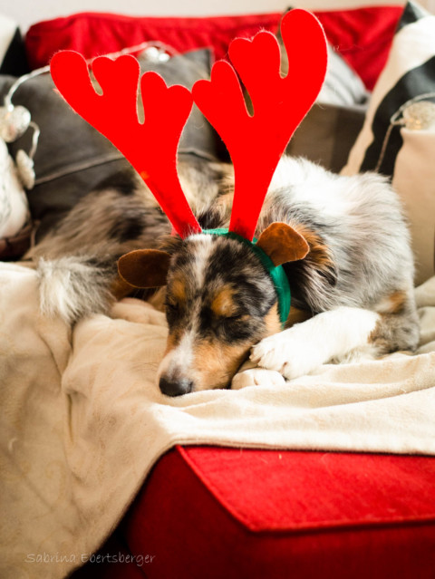 Monatspfoto Dezember 2016: Weihnachtswichtel.