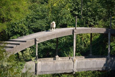 Elmo goes Roofing!  – Kanalbrücke –