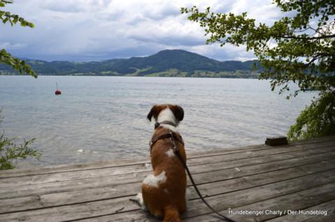 Ausflug an den Attersee – 1. Teil