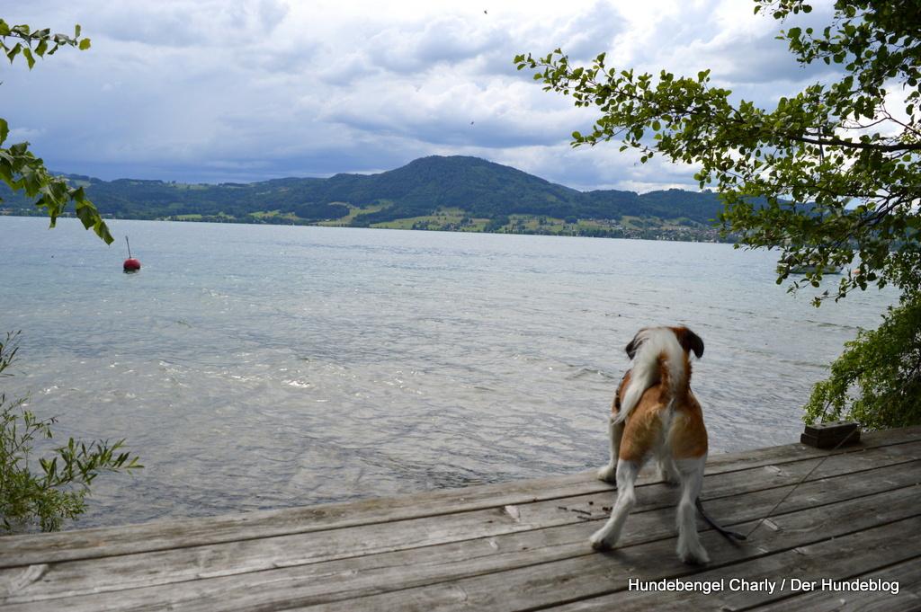 Ausflug mit Hund Attersee