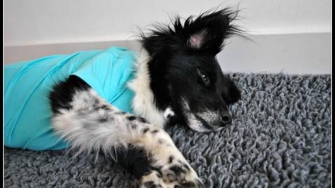 Mein Hund wird operiert und bekommt eine gesunde Pilzbrühe