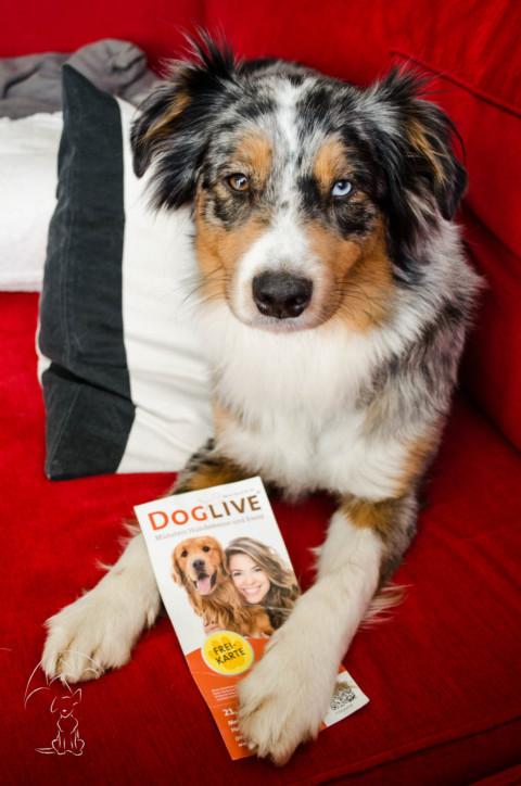 DOGLIVE 2017 – Unterwegs auf einer Hundemesse