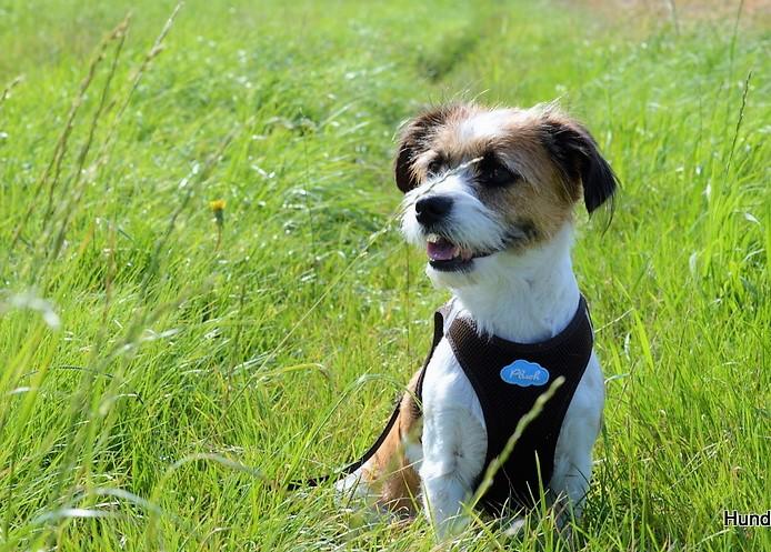 Hunde und mehr Kommunikation mit anderen Hundebesitzern