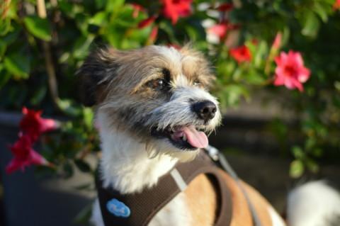 Die Suche nach einem Hundetrainer hat ein Ende
