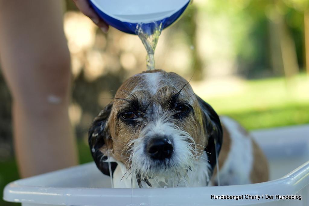 Hund richtig baden
