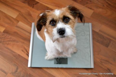 Hilfe, mein Hund neigt zu Untergewicht!