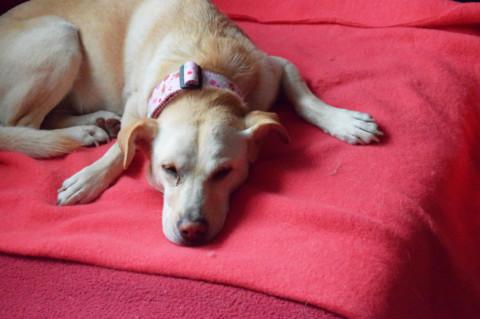[Produkttest] Flauschpohund meets Julinka – Der Beginn einer kuscheligen Lovestory