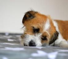 Sobald ein Hund einzieht, ändern sich die hygienischen Bedingungen komplett