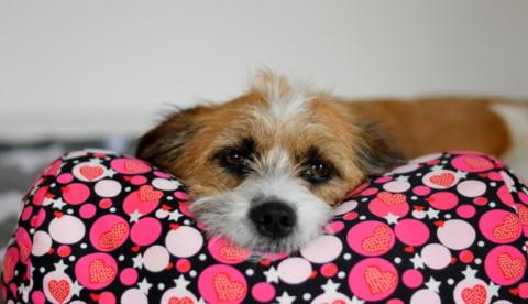 Durch mangelnde Entspannung kann der Hund ernsthaft krank werden