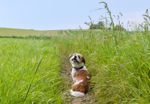 Warum dreht sich der Hund wie verrückt im Kreis, bevor er sein Geschäft verrichtet?