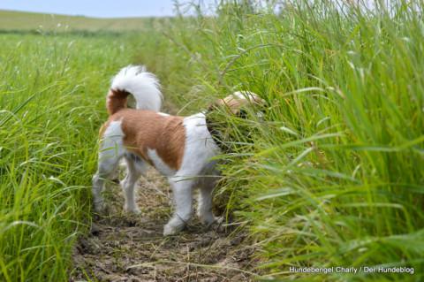 Warum scharren Hunde mit den Hinterpfoten, wenn sie ihr Geschäft erledigt haben?