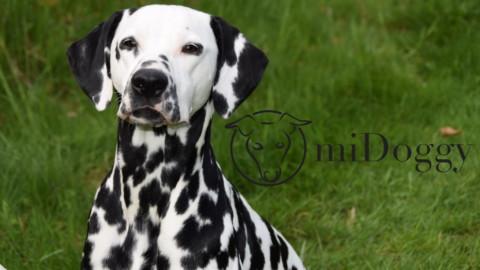 """miDoggy Blogparade """"Gassi gehen – so findet mein Hund es wieder spannend"""""""