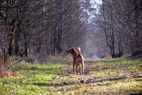 8 weitere Dinge, die Hunde an uns gar nicht gut finden