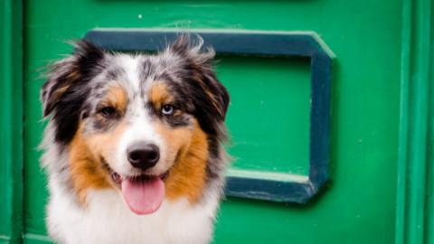 """Die 5 merkwürdigsten Antworten auf """"Mein Hund ist krank""""."""