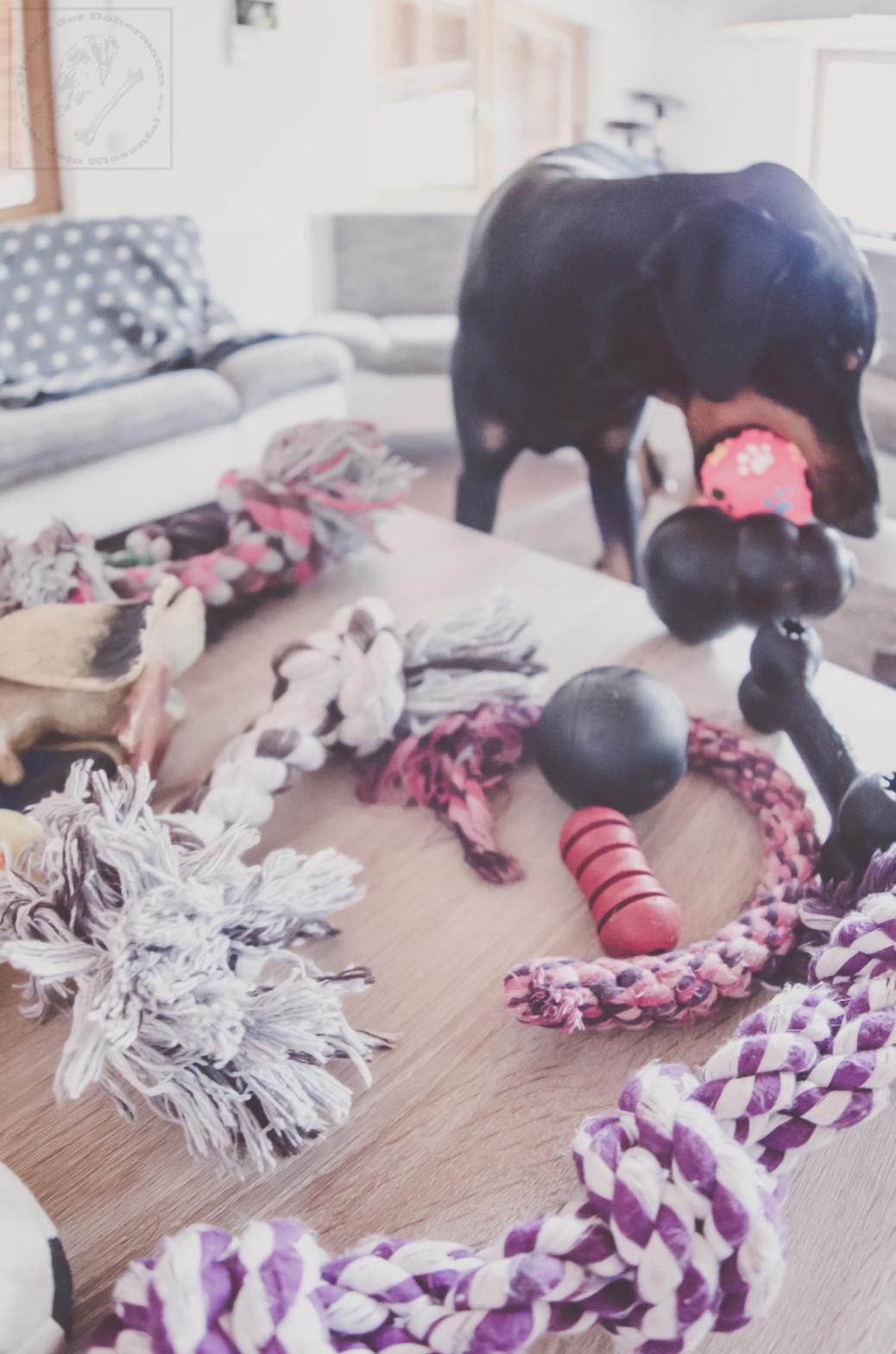 Welches Spielzeug ist giftig für meinen Hund
