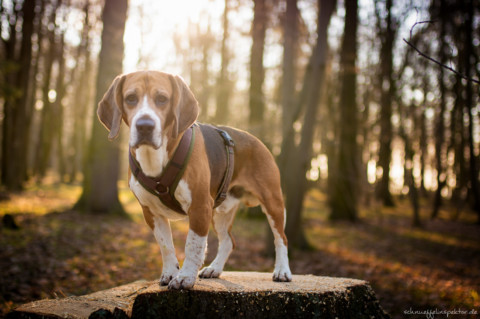 Leben mit schwierigem Hund