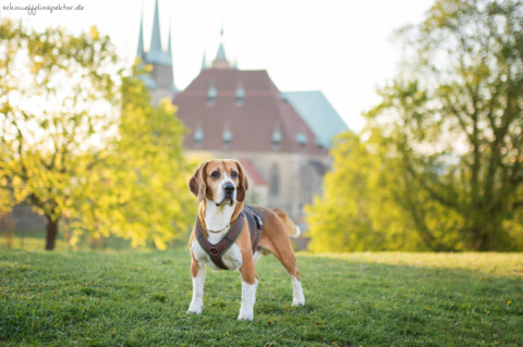 Hund und Job – Wie vereinbart man Hundehaltung und Vollzeitjob?
