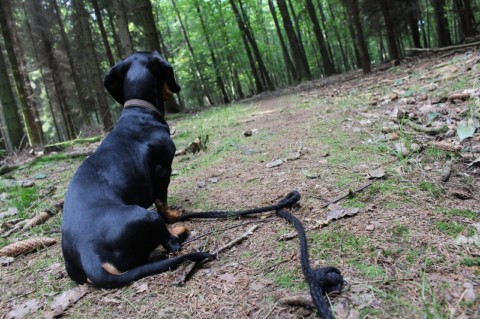 Der Herbst: Menschen- vs. Hundeansichten