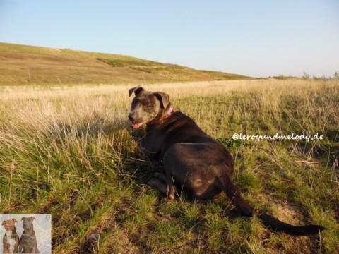 Igelzeit – Wenn ihr beim Hundegassi einen verletzten Igel entdeckt