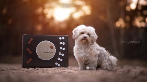 Die Lieblingbox für Hunde – Aus einer Idee wirdRealität