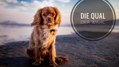 Die Qual der Wahl – Die Auswahl der richtigen Hundeschule