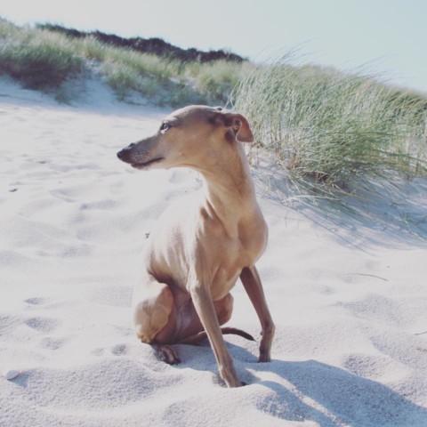 Unsere kleinen Tricks für ein nachhaltigeres Leben [mit Hund]