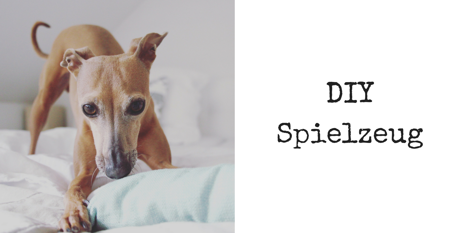 Do it yourself Spielzeug für den Hund