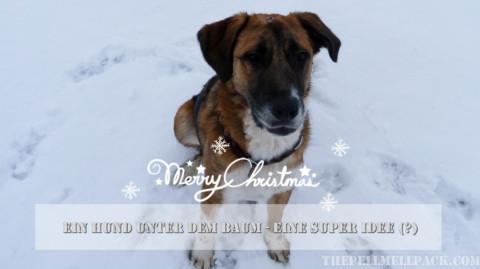 Ein Hund unter dem Baum – das schönste Geschenk