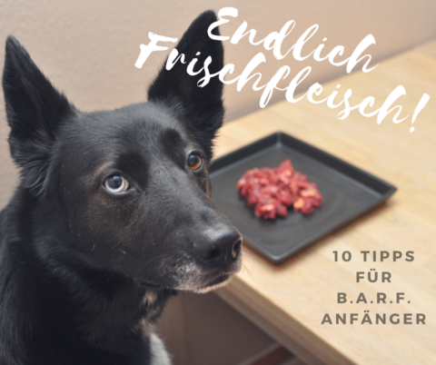 B.A.R.F. für Hund und Katze – 10 Expertentipps für Anfänger