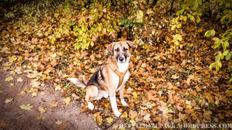 Der goldene Oktober – ein Rückblick