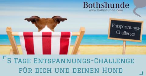 Die 5 Tage Entspannungs-Challenge für deinen Hund