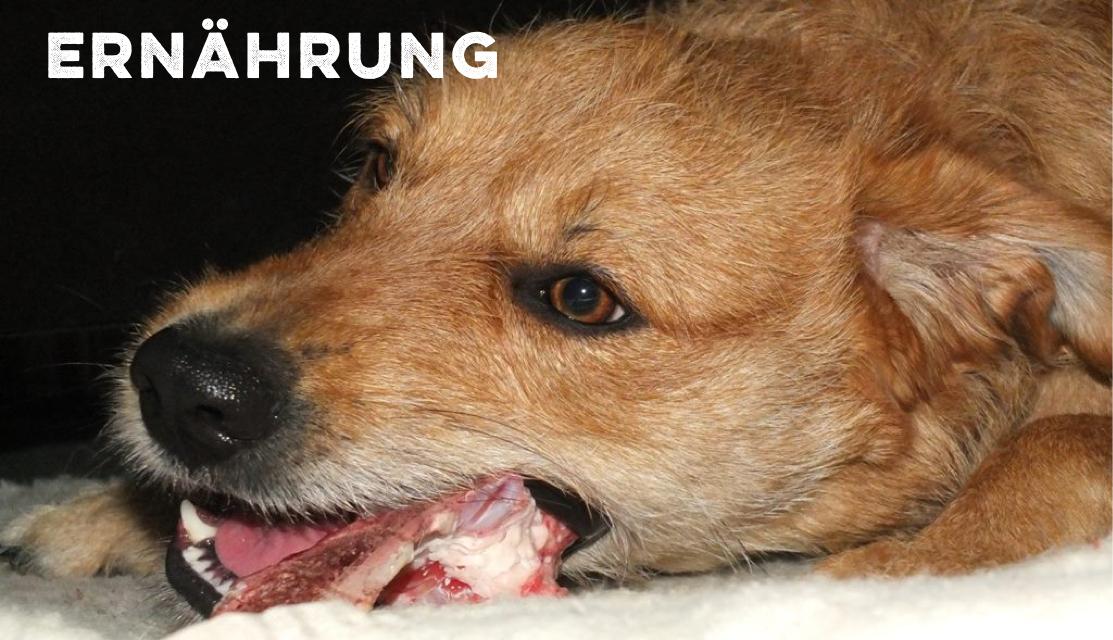 Ernährung Hund miDoggy
