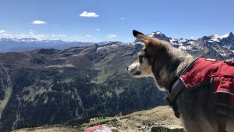 Wandern mit Hund in Osttirol – Teil1