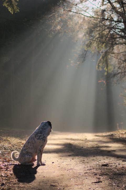 Der Zauberspruch für ein gutes Tierbild