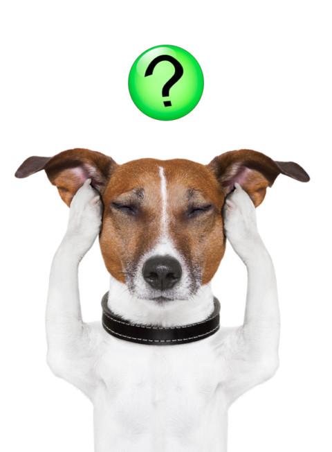 40 Gründe warum der Hund nicht kommen kann Teil 2