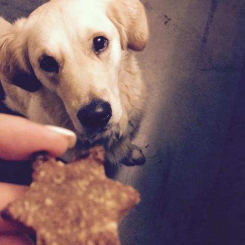 In der Weihnachtsbäckerei.. ist auch für Hunde was dabei! (Rezept für getreidefreie Hunde-Plätzchen)