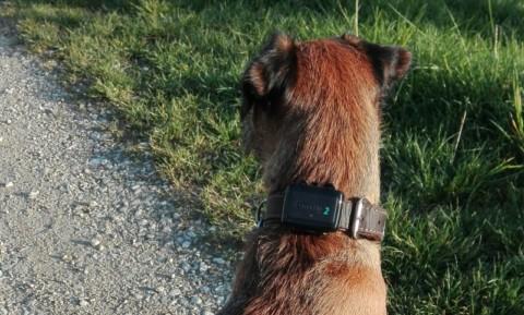 Erfahrungsbericht: Tractive® GPS-Tracker