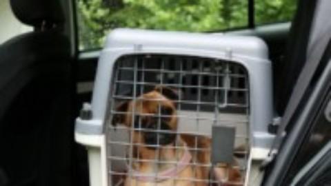 Hunde – Autobox